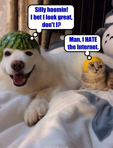 Cats,dogs,helmet,the internets