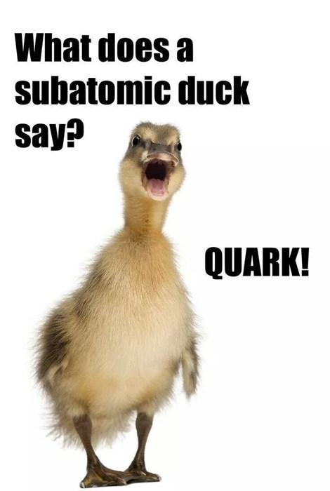 sub atomic duck says quark