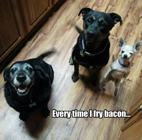 dogs,noms,bacon