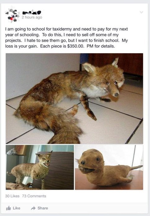 what taxidermy oh god why weird failbook