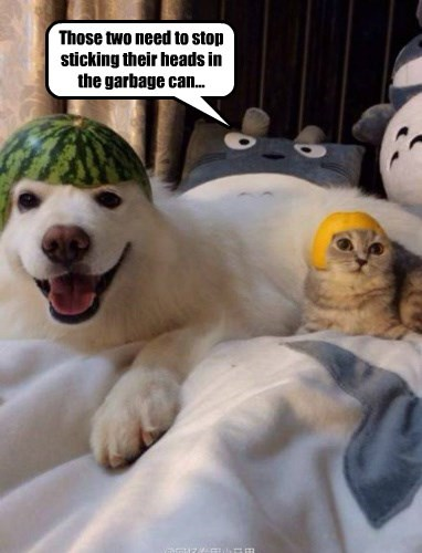 dogs,helmets,totoro,garbage,Cats