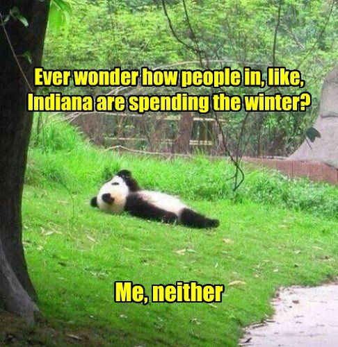 panda,Indiana,jerk,winter