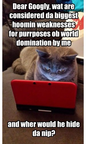 Cats,google,nip,world domination