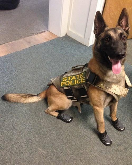 dogs police dog german shepherd boots k9 - 8428118272