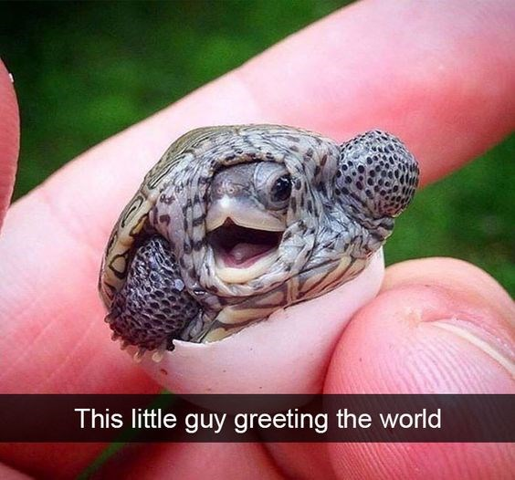 turtle waving his hand for goodbye