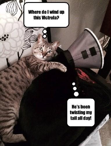 captions Cats funny - 8428335616