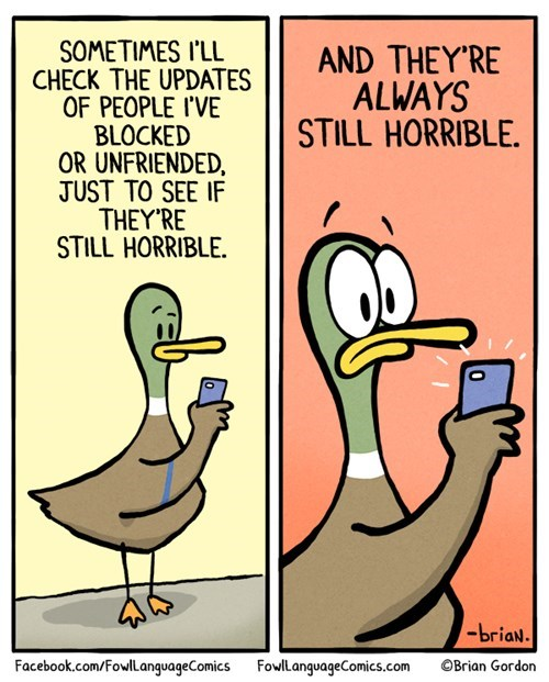 ducks,facebook,social media,web comics