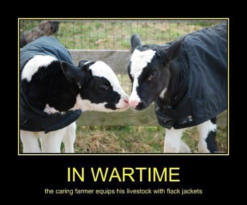 bulletproof,cows,funny,war
