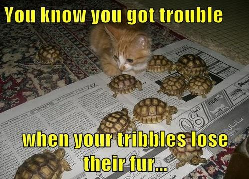 turtles kitten tribble Star Trek Cats - 8428494336