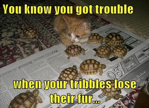 turtles kitten Star Trek Cats - 8428494336