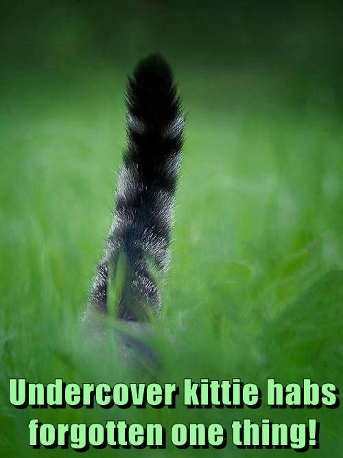 Undercover kittie habs forgotten one thing!