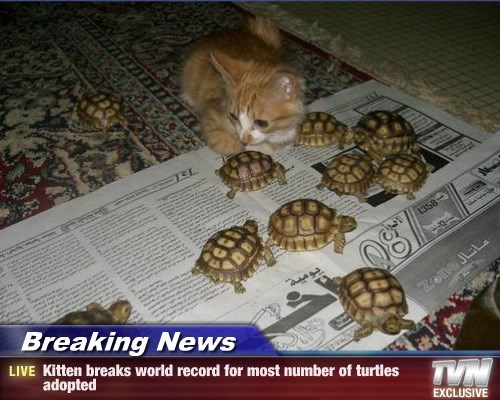 Breaking News - Kitten breaks world record for most number of turtles adopted