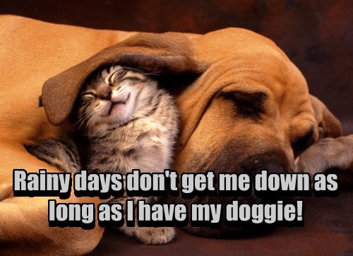 cat dogs goggie rainy day caption - 8429246464
