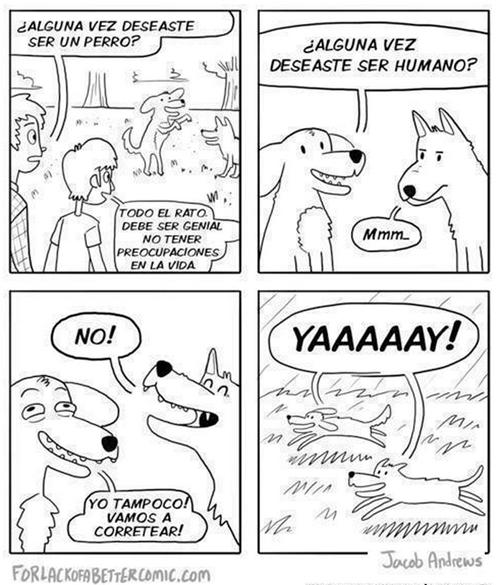 animales viñetas perros bromas - 8429587200