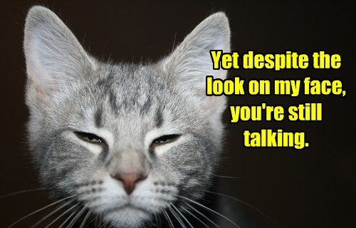 talking stop Cats - 8429868032