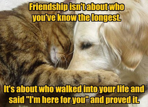 friendship cat dogs proved caption - 8429873920