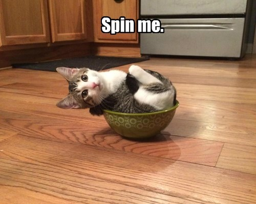 if i fits i sits spin bowl Cats - 8429909248