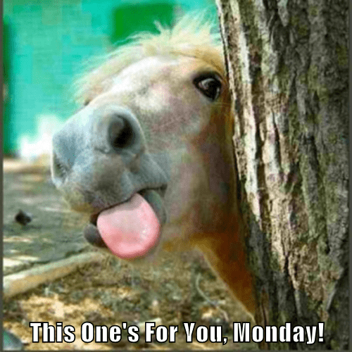 animals tongue horse monday - 8429957632