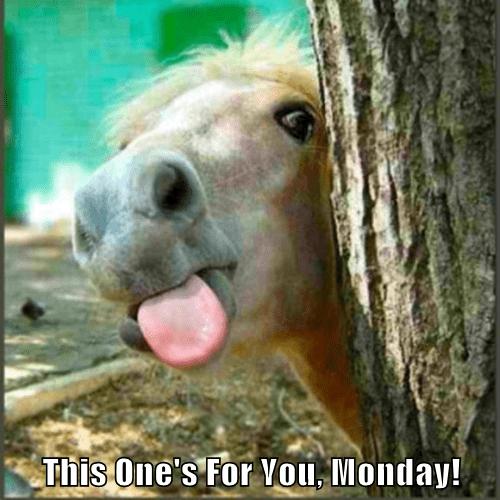 animals tongue horse monday - 8429957632