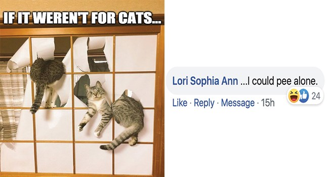 I Can Has Cheezburger responses facebook lol challenge Cats funny - 8430085