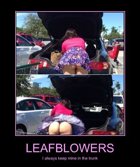 cars,leaf blower,funny,seyx ladies