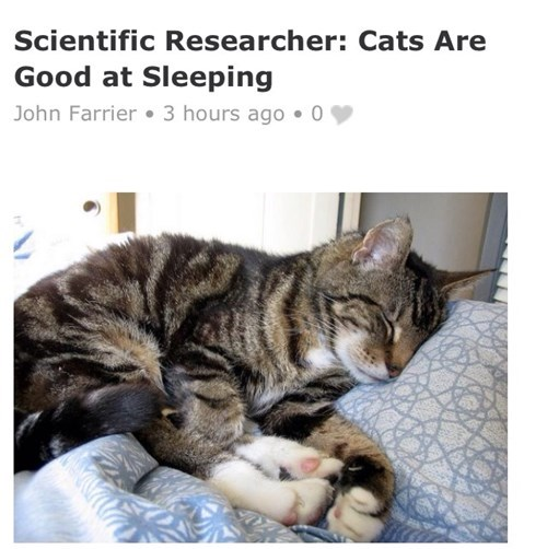 cats are good at sleeping says science