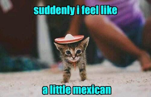 Mexican kitten puns noms - 8430739200
