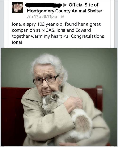 Cats cute adoption rescued senior - 8430822912