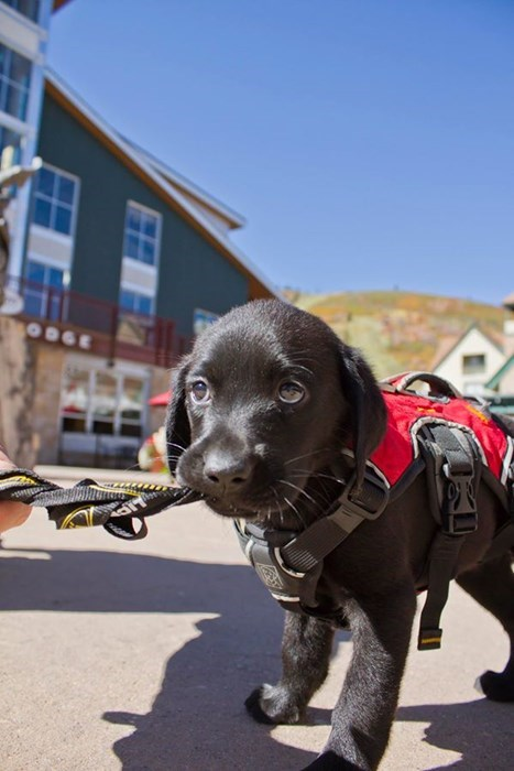 avalanche cute dogs puppy training