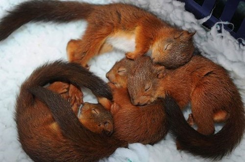 cute,squirrels,sleeping