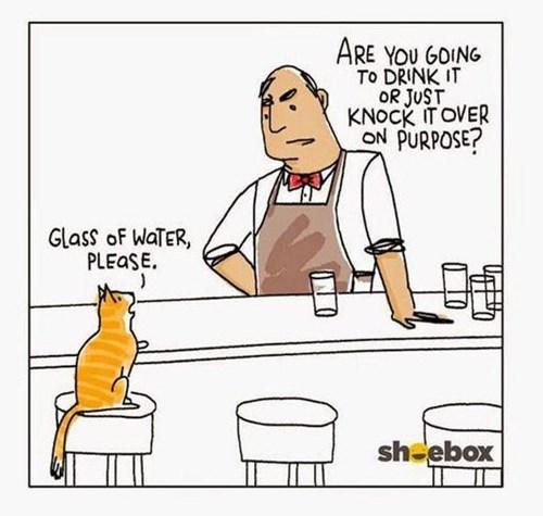 drinking water Cats web comics - 8430850560