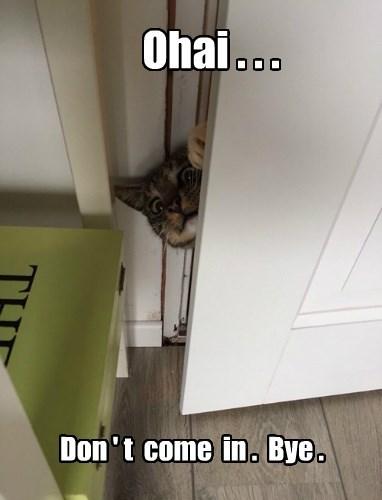 ohai nip Cats - 8430864128
