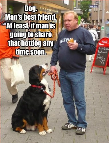 Dog. Man's best friend. At least, if man is going to share that hotdog any time soon.