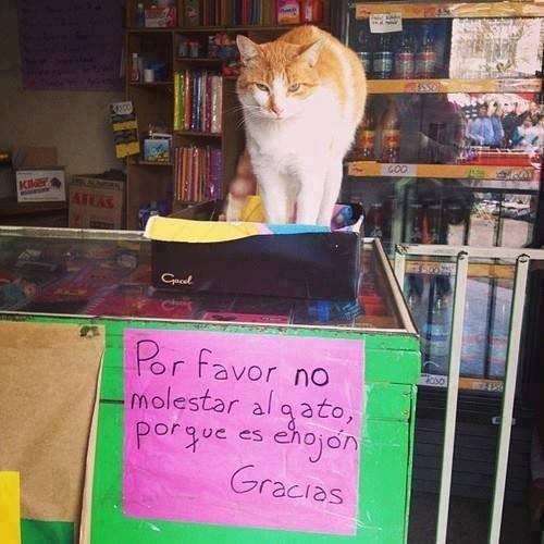 gatos curiosidades animales fotos - 8430906880