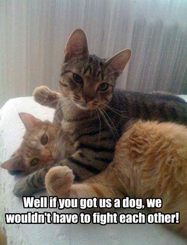 tabby fight Cats - 8430947840