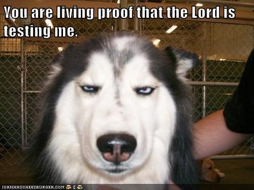 animals dogs testing lord caption - 8430976512