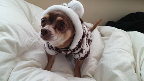 puppy cute - 8431130112