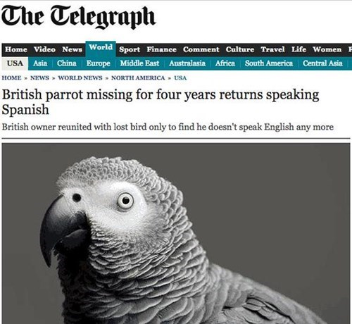 news,pets,Probably bad News,parrot,fail nation,g rated