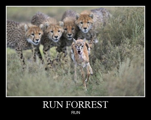 Forrest Gump wtf cheetah funny - 8431366656