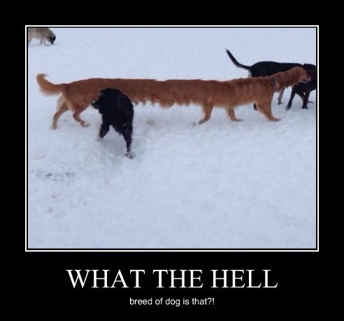 dogs wtf long funny - 8431367424