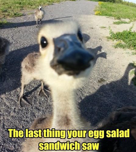 ducks selfie noms thief - 8431552512