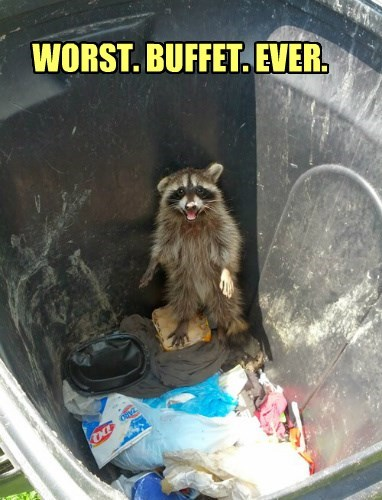 Raccoon Problems