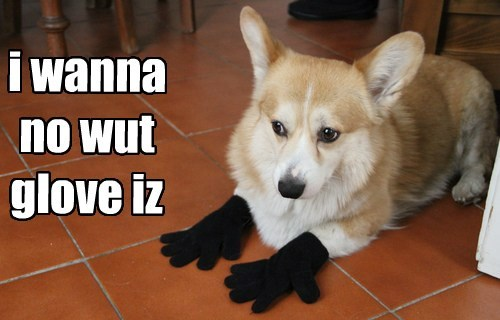 gloves,puns,corgi