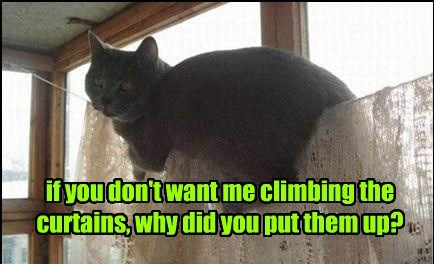 cat curtains climbing caption - 8431718656