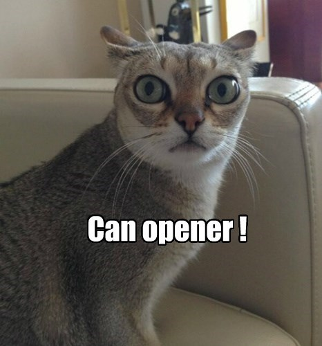 can opener,Cats,Predator,noms