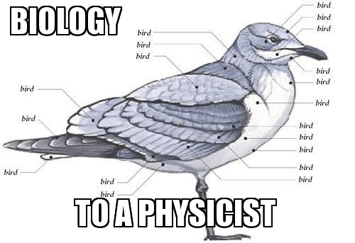 physicists don't know all the parts of birds