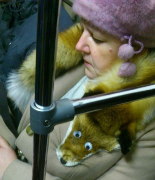scarf,fur,poorly dressed,Cannot Be Unseen,fox,googly eyes