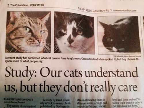 i dont care news Cats seems legit