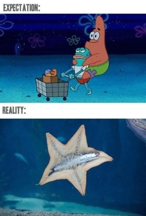 right in the childhood expectations vs reality SpongeBob SquarePants cartoons - 8431883008