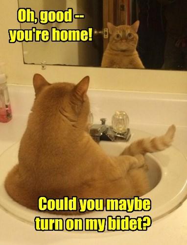 Cats,bidet,mirror,ohai,tabby